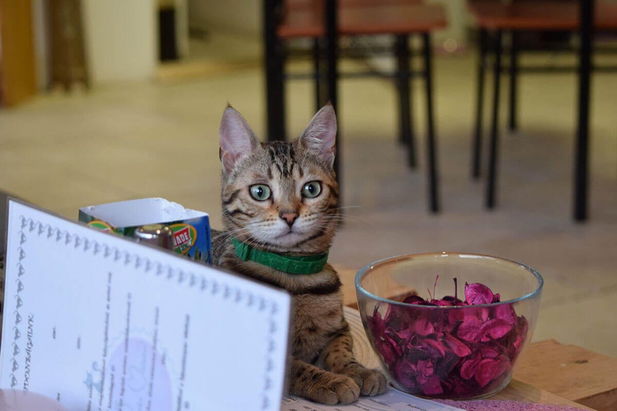 Macska Maister cicás kávéház - Nagykanizsa