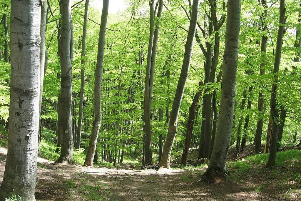 Mura-erdő - Tornyiszentmiklós