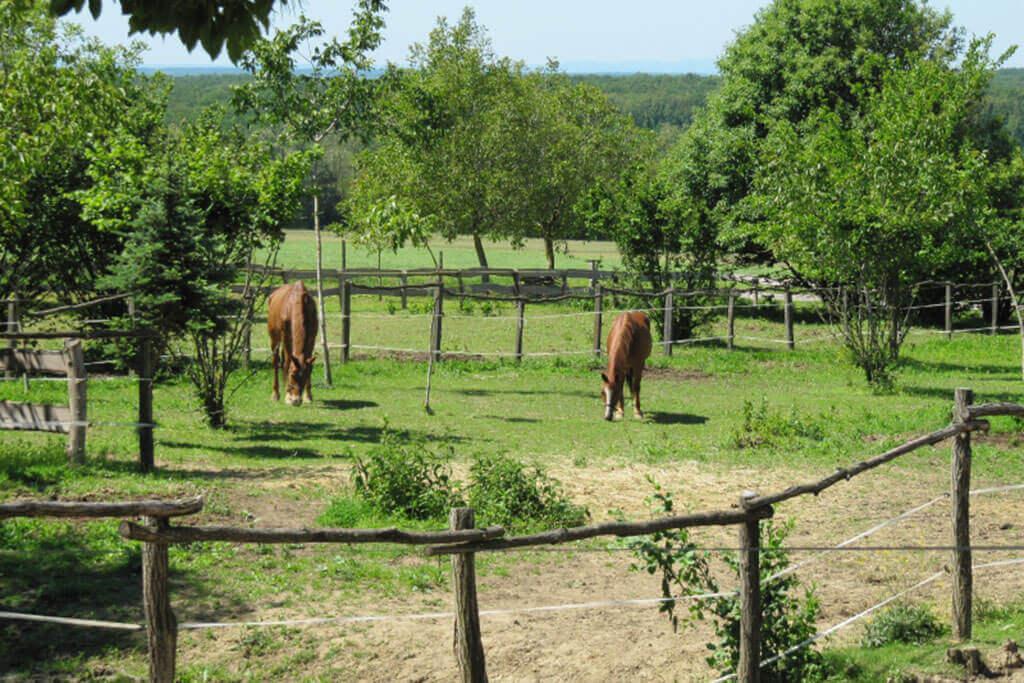 Rencsi lovasudvar - Kisrécse